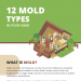 12-TYPES-OF-MOLD-FOUNDED-IN-HOME-infographic-plaza