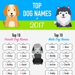 2017-top-dog-names-infographic-plaza