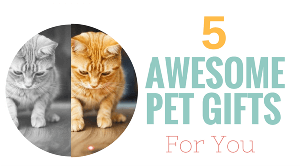5-awesome-pet-gifts-for-you-infographic-plaza-thumb