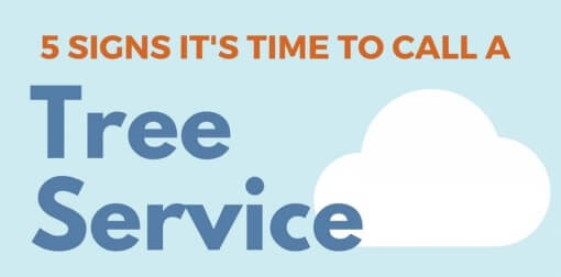 5-signs-its-time-to-call-a-tree-service-dublin-ireland-infographic-plaza-thumb