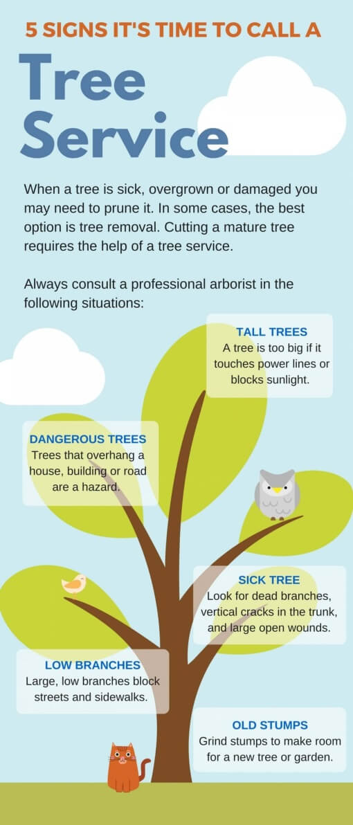 5-signs-its-time-to-call-a-tree-service-dublin-ireland-infographic-plaza