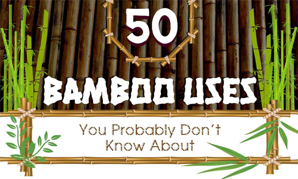 50-Bamboo-Uses-Infographic-plaza-thumb