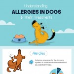 Allergies-in-dogs-infographic-plaza