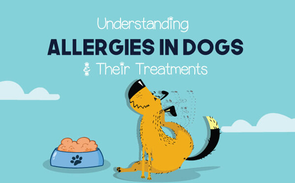 Allergies-in-dogs-infographic-plaza-thumb