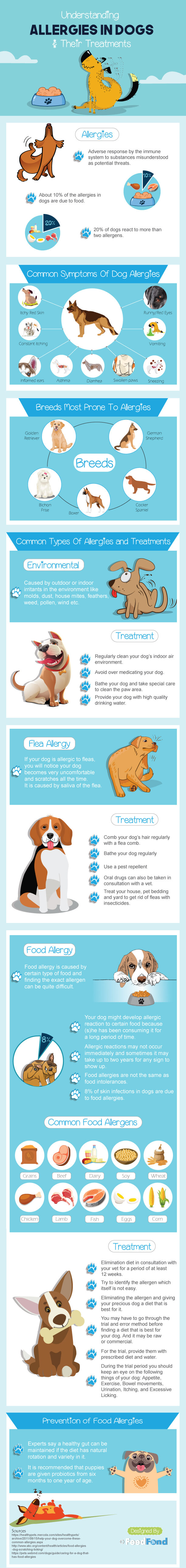 Understanding Allergies in Dogs & Their Treatments