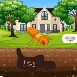 Amco-Ranger-Termite-Infographic-plaza