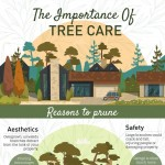 Benefits of Caring for Trees-infographic-plaza