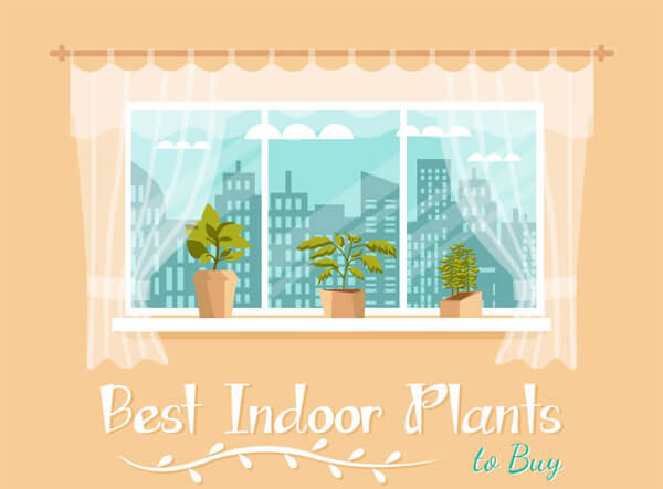 Best-Indoor-Plants-Infographic-plaza-thumb
