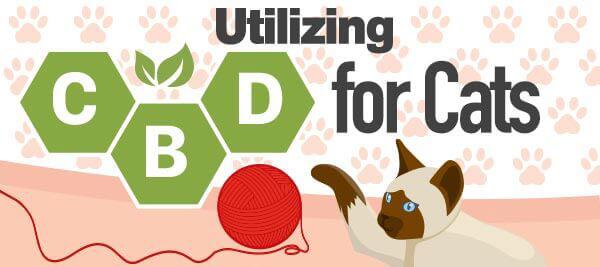 CBD-for-cats-infographic-plaza-thumb