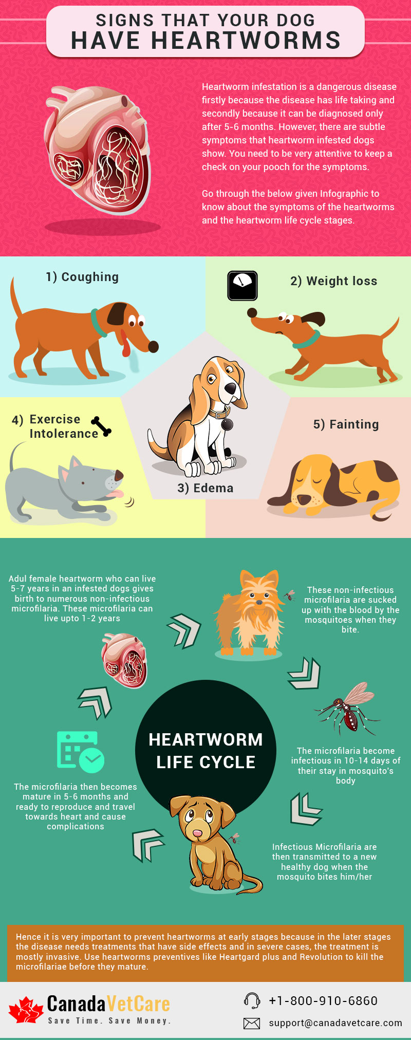 CVC-SIGNS-DOG-HAVE-HEARTWORMS-infographic-plaza