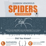 Common-Poisonous-Spiders-in-Minnesota-infographic-plaza