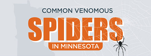Common-Poisonous-Spiders-in-Minnesota-infographic-plaza-thumb