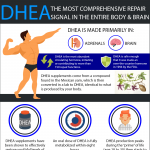 DHEA-for-men-and-women-infographic-plaza