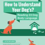 Dog-Body-Language-infographic-plaza