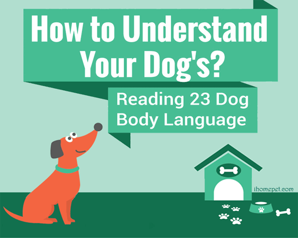 Dog-Body-Language-infographic-plaza-thumb