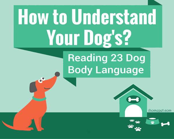 Dog-Body-Language-infographic-plaza-thumb