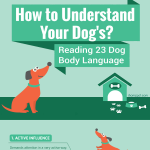 Dog-Body-Language-infographic-plaza