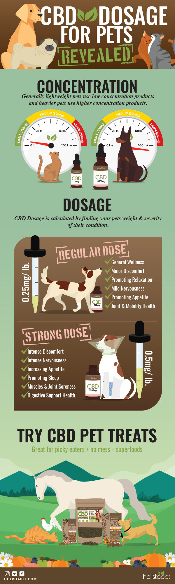 How-much-CBD-oil-should-I-give-my-dog-infographic-plaza