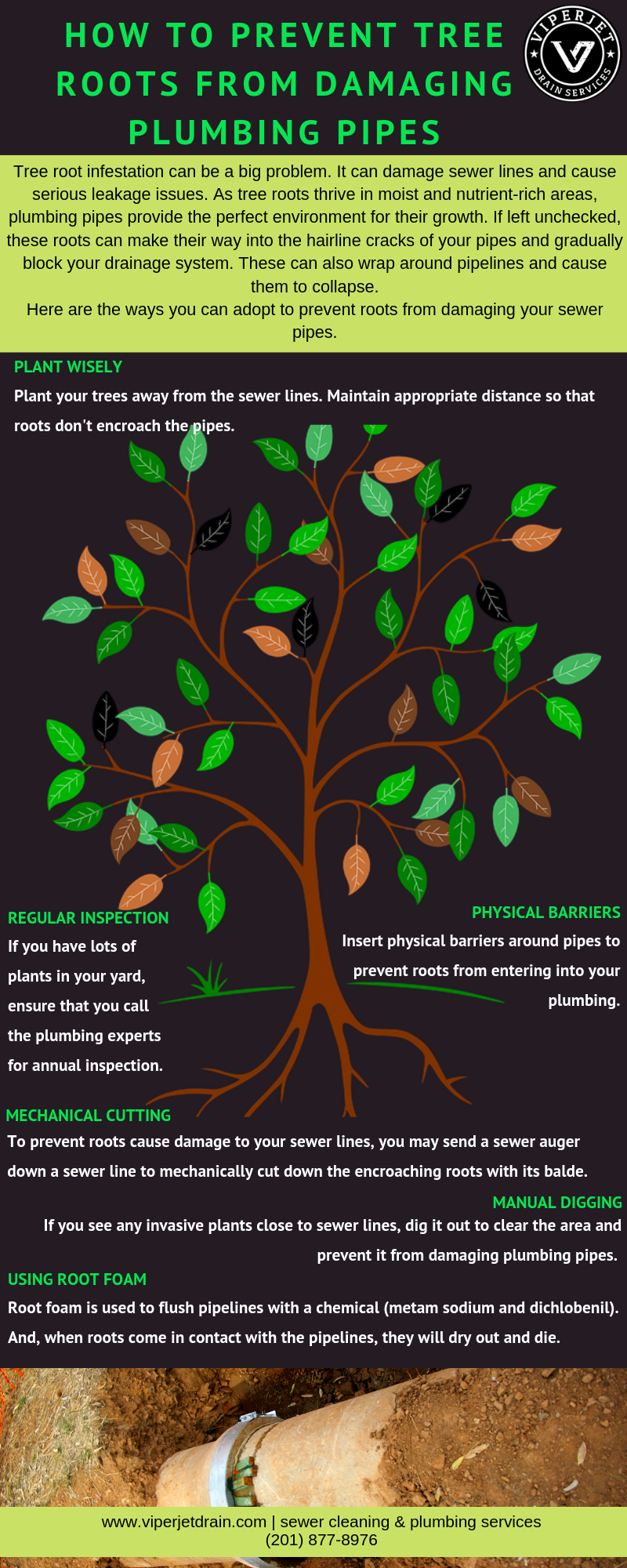 How-to-Prevent-Tree-Roots-from-Damaging-Plumbing-Pipes-infographic-plaza