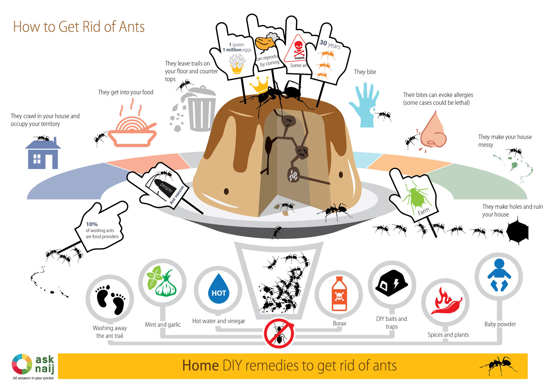 How to Get rid of Ants - 7 DIY Remedies