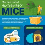 Mice-Pest-Control-How-To-Get-Rid-of-Mice-infographic-plaza