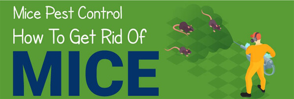 Mice-Pest-Control-How-To-Get-Rid-of-Mice-infographic-plaza-thumb