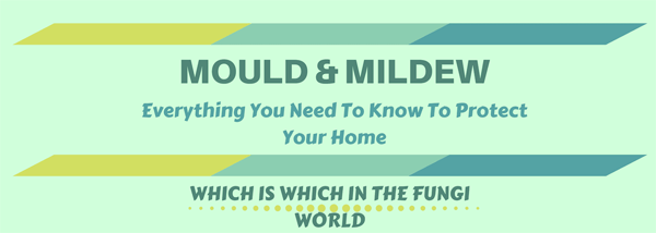 Mould-Mildew-infographic-plaza-thumb
