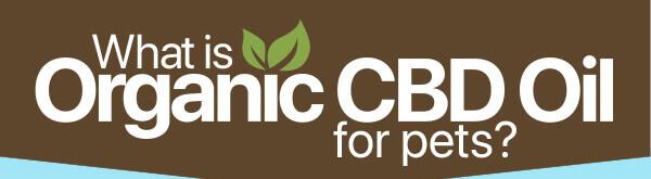 Organic-CBD-Oil-for-Dogs-infographic-plaza-thumb