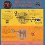 Pet-and-Tap-Water-infographic