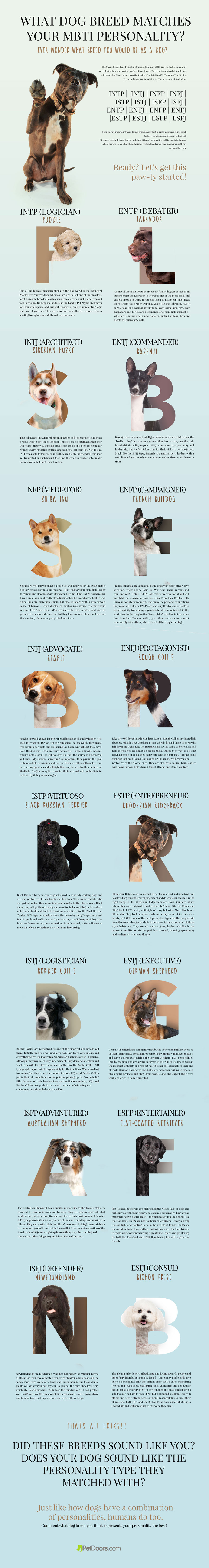 PetDoor_MBTI_Test-infographic-plaza