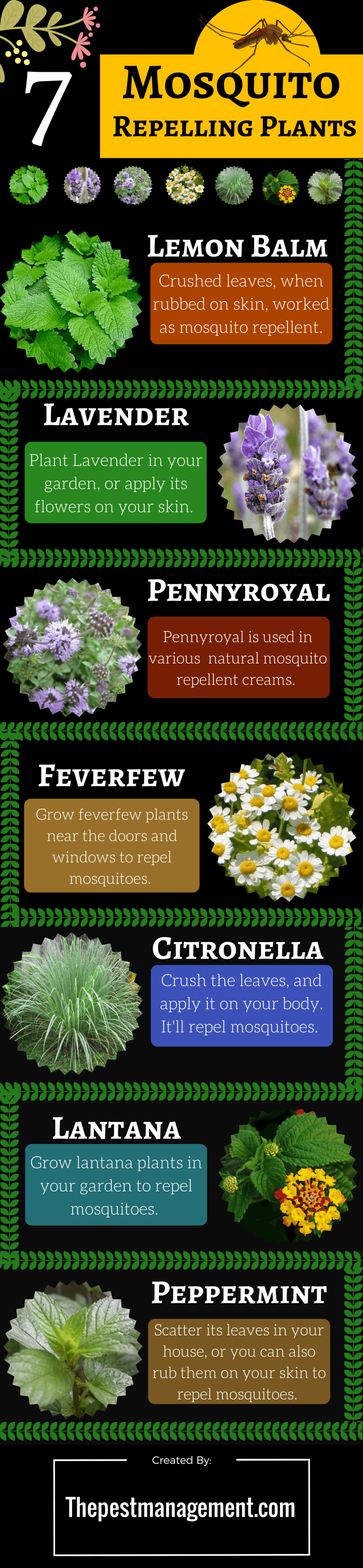 Plants-that-repel-mosquitoes-infographic-plaza
