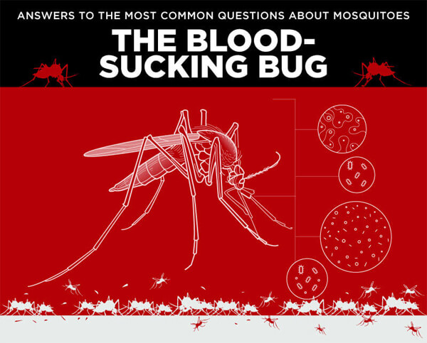 Pointe_The-Blood-Sucking-Bug-infographic-plaza-thumb