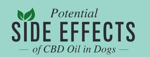 Potential-side-effects-of-CBD-oil-in-dogs-and-cats-infographic-plaza-thumb