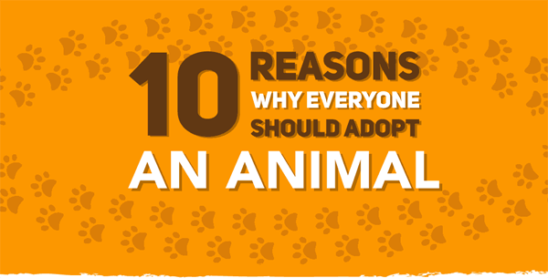 Reasons-to-adopt-an-animal-infographic-plaza-thumb