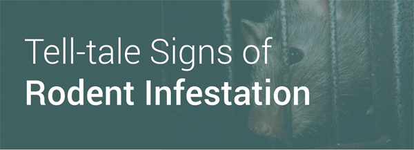 Tell-tale-Signs-Of-Rodent-Infestation-infographic-thumb