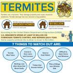Termites-infographic-plaza
