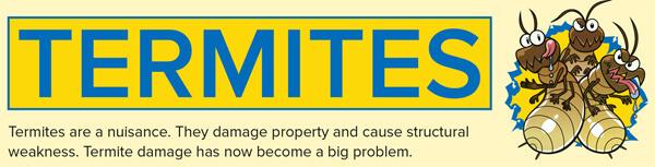 Termites-infographic-plaza-thumb