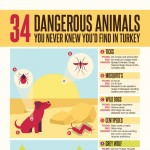 The-34-Most-DangerousAnimals-in-Turkey-infographic