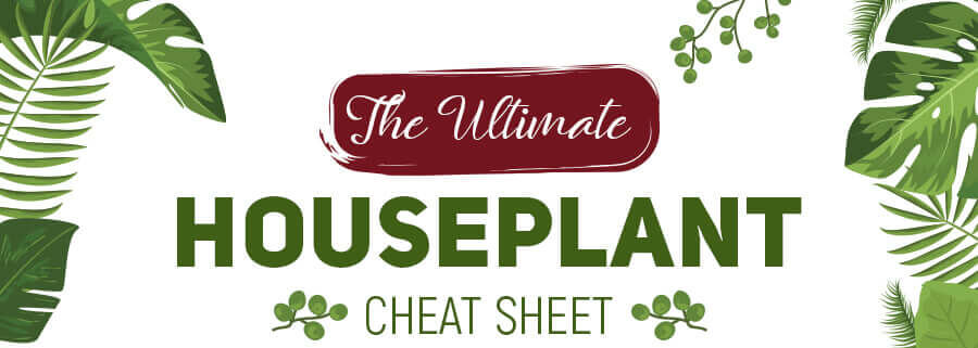 The-Ultimate-Houseplant-Cheat-Sheet-infographic-plaza-thumb