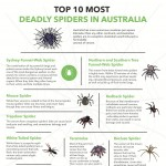 Top-10-Deadly-Australian-Spiders-Infographic-plaza