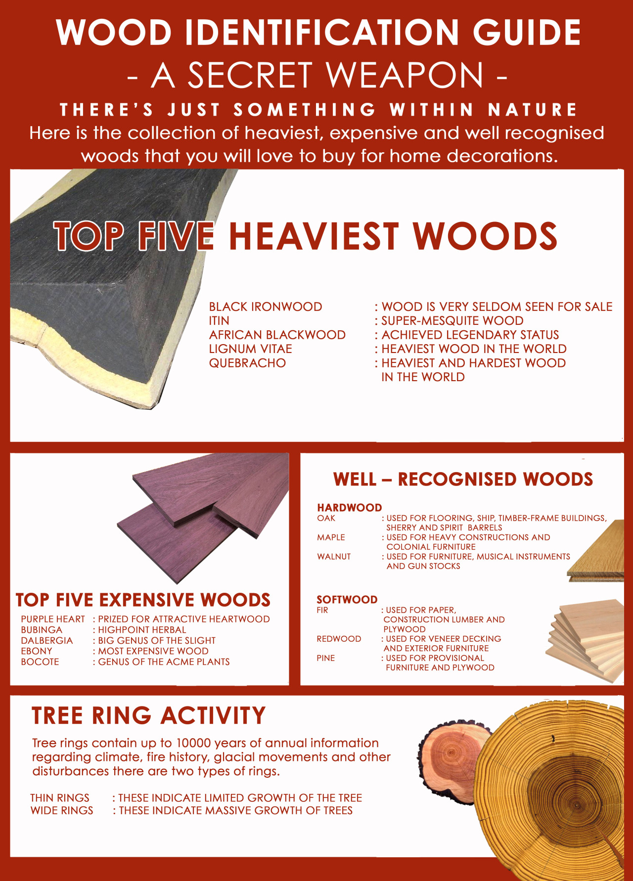 Wood Identification Guide
