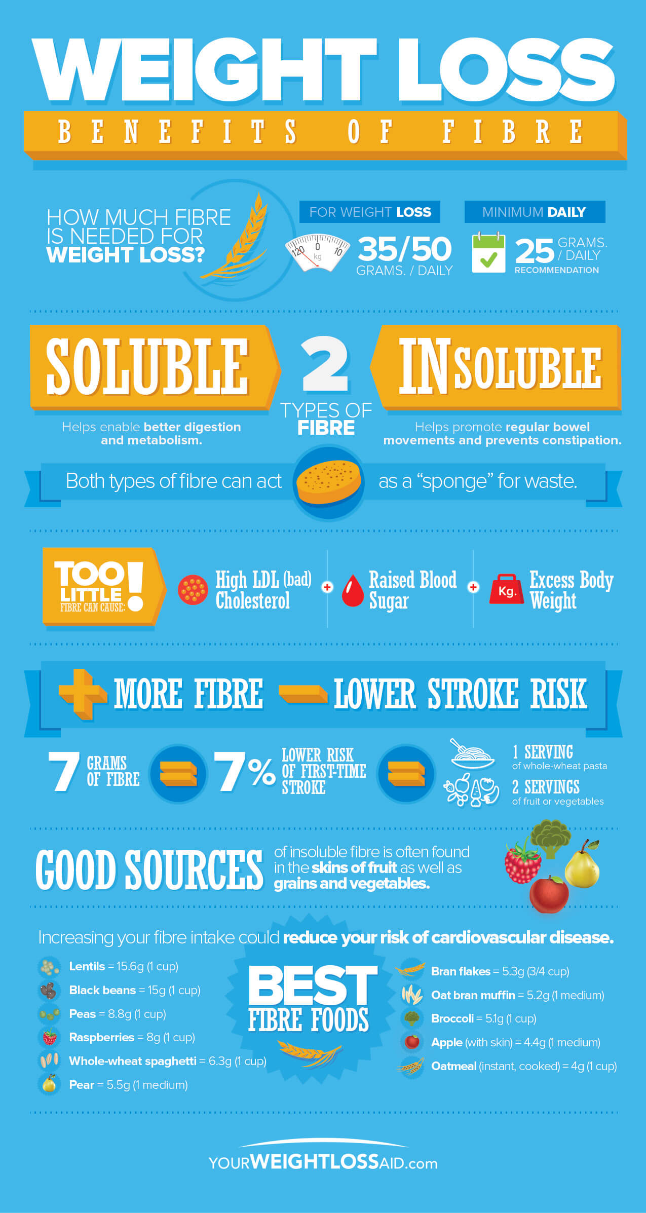 Weight-Loss-Benefits-of-Fibre-infographic