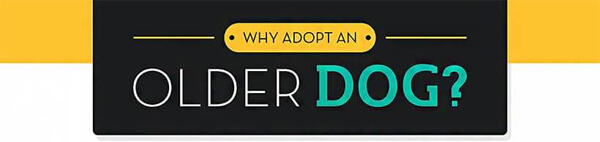adopting-an-older-dog-infographic-plaza-thumb