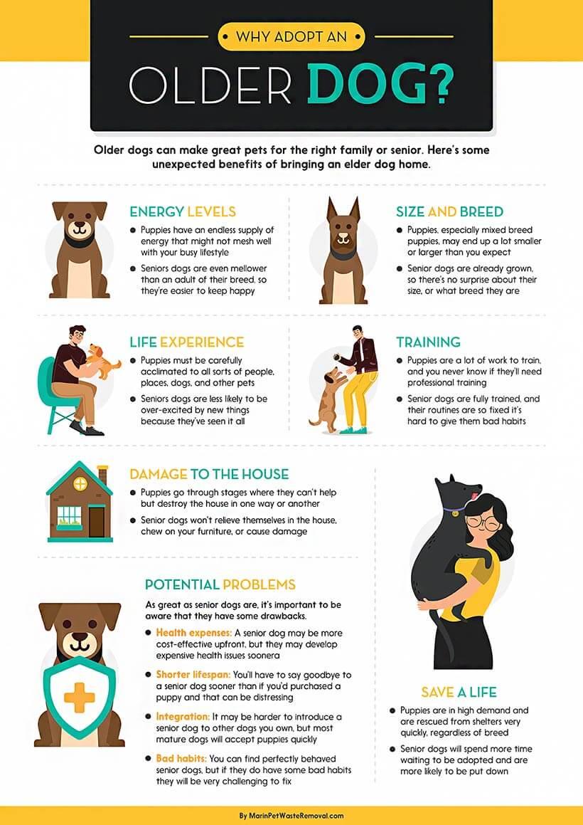 adopting-an-older-dog-infographic-plaza