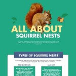 all-about-squirrel-nests-infographic-plaza