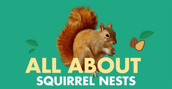 all-about-squirrel-nests-infographic-plaza-thumb
