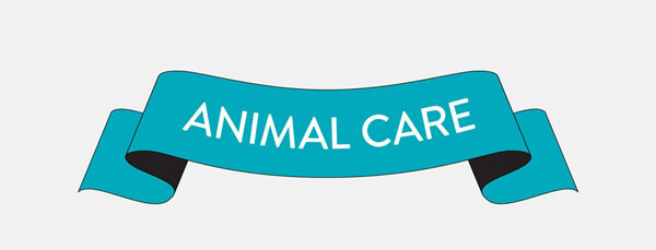 animal_care_infographic-plaza-thumb