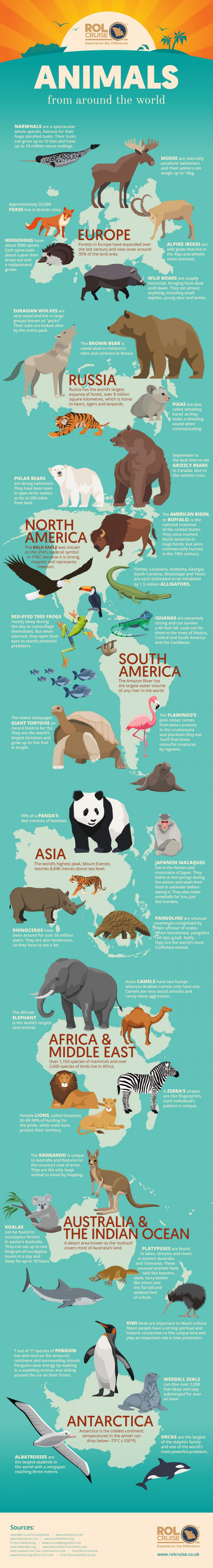 animals-from-around-the-world-infographic-plaza