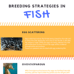 breeding-strategies-fish-infographic-plaza
