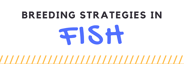 breeding-strategies-fish-infographic-plaza-thumb